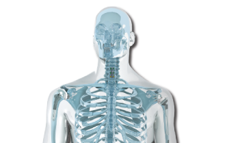 What-does-orthopaedics-involve-skeleton-w-implants